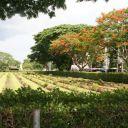 war-cemetery-kanchanaburi-r