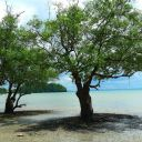Mangrove Railey East 2