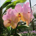 transparence d\'orchidée